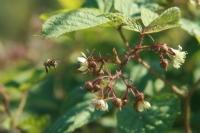 Arılar İş Başında