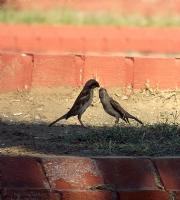 Kuşlar Ve Aşk