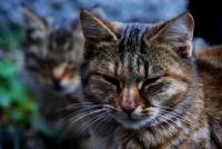 Kedi Ve Yavrusu