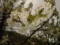 Bahar...