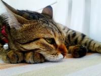 Bana Tavır Yapan Kedim :)