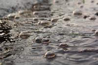 Yağmur Ve Baloncukları...