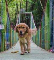 Köprüden Geçen Köpekcik