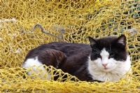 Balıkçı Kedisi...