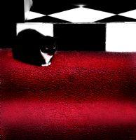 The Cat___!