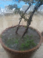 Yağmur   2