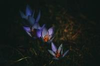 Renkler Baharı