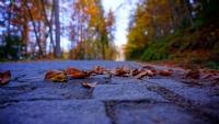Sonbahar Yolları