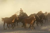 atlar ve çocuk - Fotoğraf: Muhammed Nuri Sert