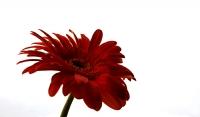 Muay13122019(çiçek)_9
