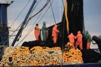 Balıkçılar Ağları Çekiyor
