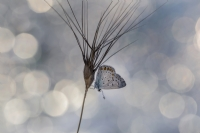 Kelebeğin Rüyası...