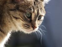 Kediler Kediler