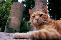 Eyüp Sultan'ın Kedileri_21