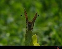 Bir Kelebeğin Duruşu