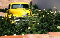 Sarı Papatyalar Ve Chevrolet