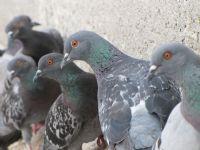 Yeni Camii Kuşları