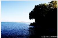 Ahlat'ta Arslan Görünümlü Ağaç