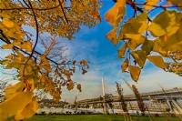 Sarı Taçlı Köprü