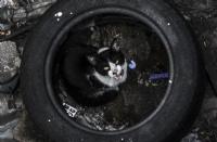 Sokak Hayvanları (kedi)