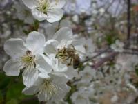 Arı Bende Bal Yok Çiçeklerde Daha Çok :)