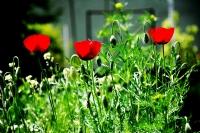 Üç Çiçekşörler