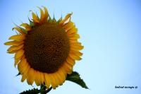 Güne Bakan