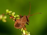 böcek - Fotoğraf: Mehmet Aydın