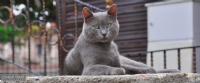 İstanbul'da Bir Kedi