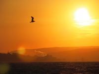 Güneşe Uçmak