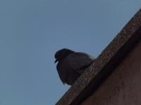 Kuş Misali...