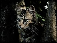 Ağaç Dalındaki Kedi