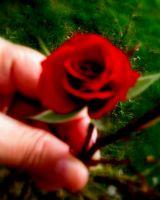 Sevgiye Dokunuş...