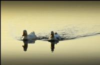 Sapanca Gölü Sakinleri..2