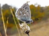 Kelebek Aşkı 2