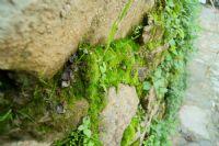 Yosul Yeşili