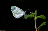 Narin Orman Beyaz�.. - Foto�raf: Fahri Sulak