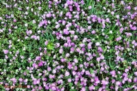 Bahar Bitkileri