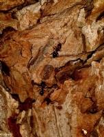 Karınca Kararınca 1