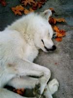 Uyuyan Yakışıklı :)