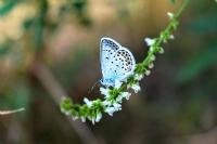 Kelebek Tutkusu