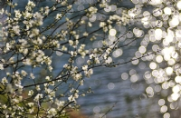 Bahar Işıltısı - Fotoğraf: Nazim Zengin