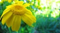 Sarı Çiçek :)