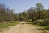 Sefaalanı Ormanı
