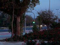 Trafik Işıkları