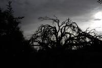 Ters Işık Kurumuş Ağaç