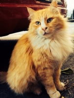 Karpostallık Kedim :)
