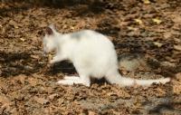 Beyaz Kanguru ..