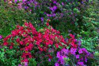 Açelya Bahçesi