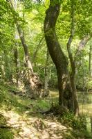 Demirk�y Ormanlar�